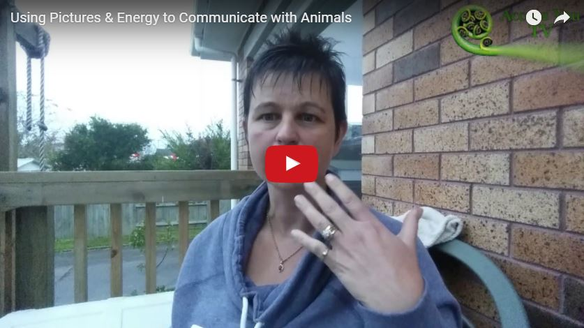 Using Pictures & Energy to Communicate with Animals